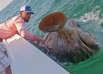 Wilson Chandler pescó un 'monstruo' de más de ¡150 kg!