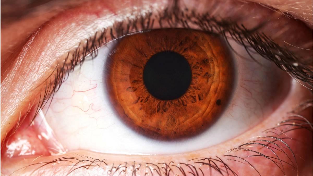 La iridología, nuestro organismo a examen a través de los ojos