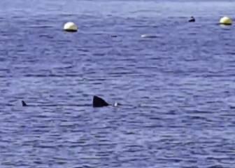 Los animales siguen ganando terreno... esta vez por mar: ojo a lo que se vio en Motril