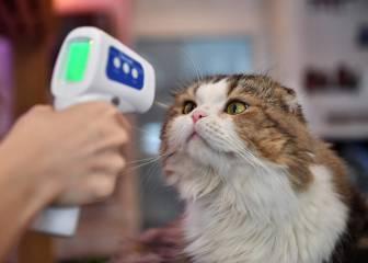 Si tengo el coronavirus, ¿debo distanciarme de mi mascota?