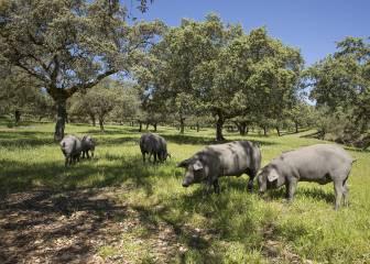 Estados Unidos declara a España la guerra del jamón ibérico