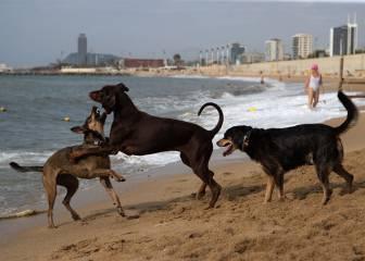 Portugal penará con cárcel matar mascotas