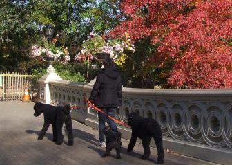 Las recomendaciones de la DGT para pasear los perros por la vía pública