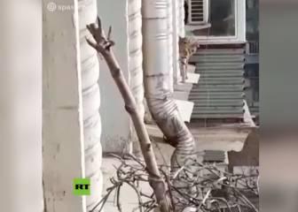 Imaginen abrir la ventana y encontrarse con esto: en Moscú todavía alucinan