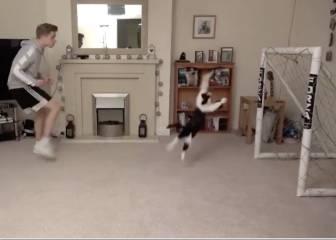 Se cuentan por millones en Youtube pero ninguno le superará ya: el mejor vídeo de gatos y fútbol grabado jamás...