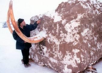 El primer paso hacia el retorno del mamut