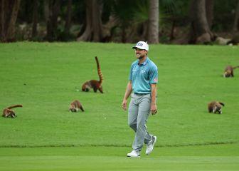 Austin Cook juega al golf entre coatís 1