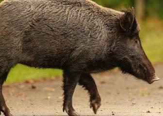 ¿En qué provincias es más probable chocar con un animal?