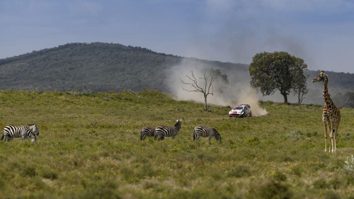 Animals-come-into-play-in-the-Safari-lottery