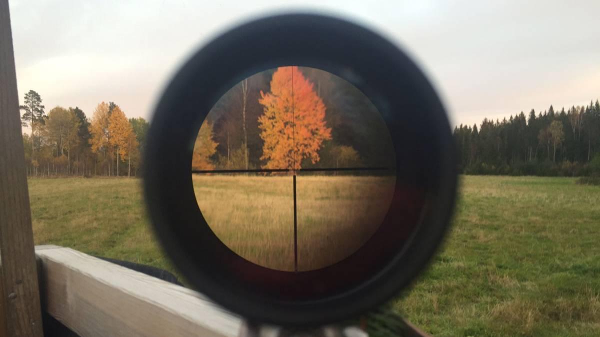 Campo, caza e ilusión