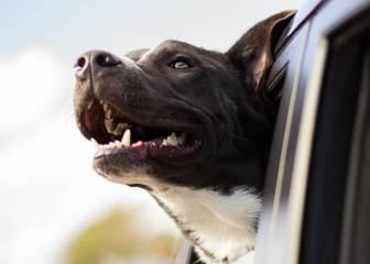 Viajar con mascotas: Destinos, hoteles y accesorios