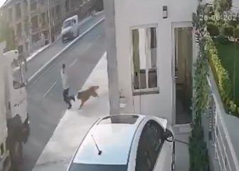 Imágenes muy duras: un perro ladra y provoca que un camión atropelle a un hombre